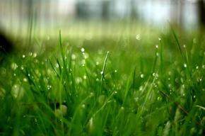 Příprava půdy pro trávník